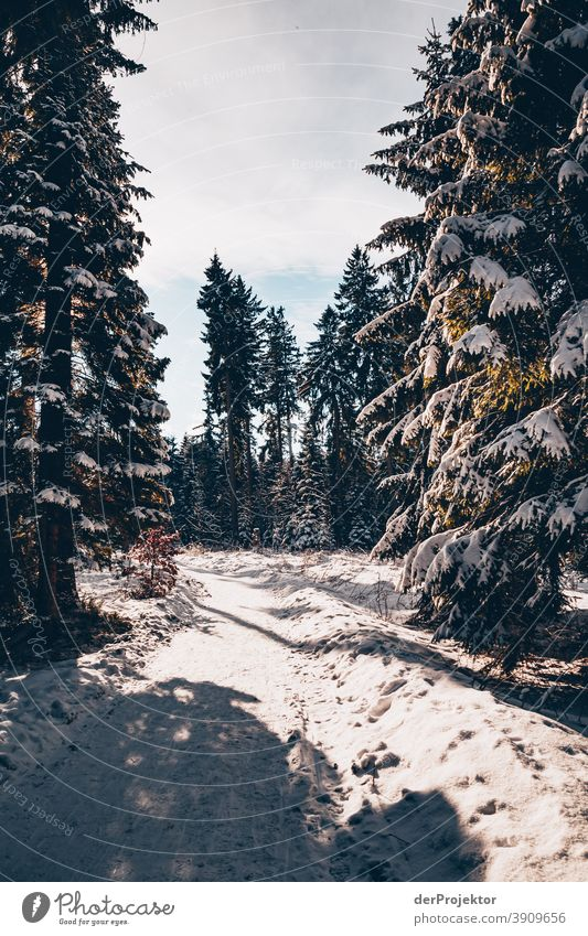 Snow-covered coniferous trees with sun in the Harz III Joerg farys National Park nature conservation Lower Saxony Winter Experiencing nature Nature reserve