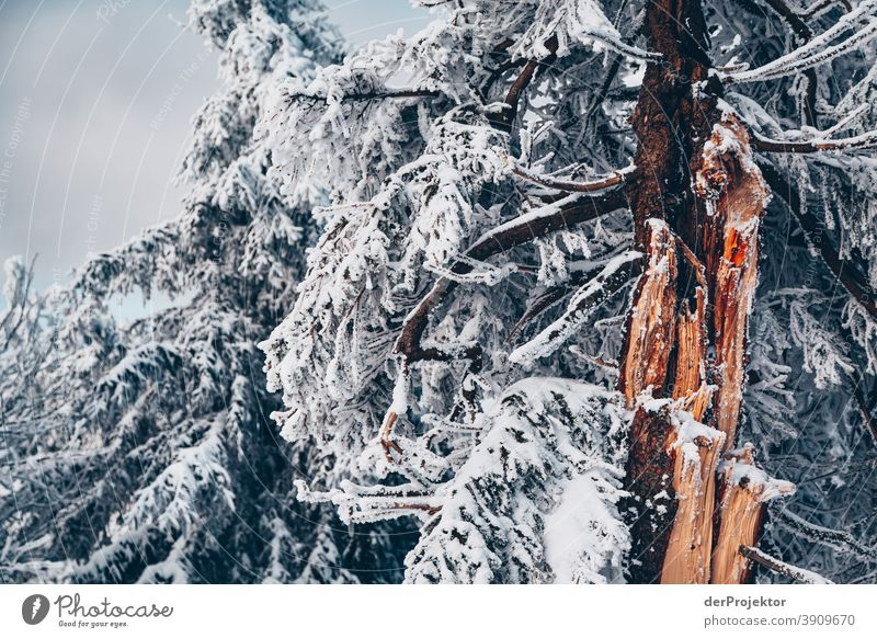Snow-covered conifers in the Harz Mountains Joerg farys National Park nature conservation Lower Saxony Winter Experiencing nature Nature reserve