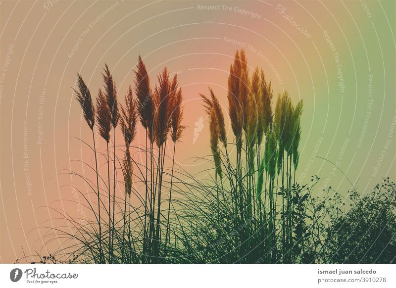 white flower plants and raimbow sky sunset sunlight bright silhouette colors colorful garden floral nature romantic beauty fragility freshness grass season