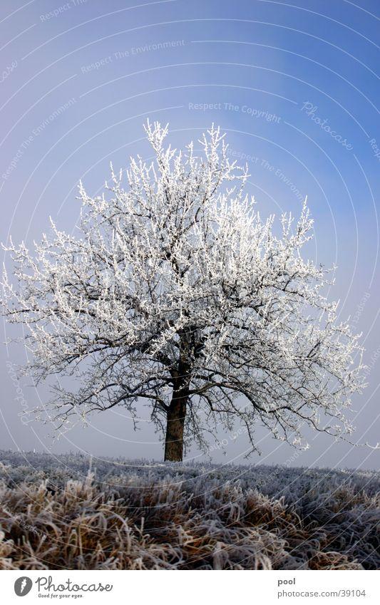 Sky White Tree Blue Winter Cold Snow Landscape Ice Frost Level Hoar frost