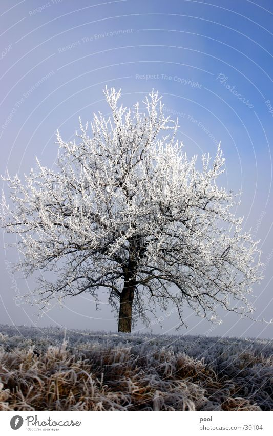 Tree in hoarfrost Winter Cold Light Hoar frost White Snow Blue Sky Frost Ice Landscape Level