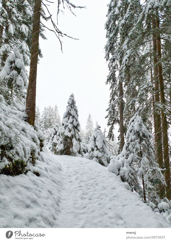 Fresh snowy forest, Advent magic Winter's day Winter magic winter Snow Spruce forest Hiking trails Promenade Landscape Frost Winter forest Winter vacation