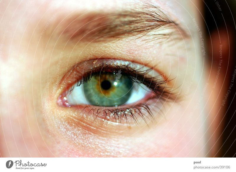 kim Pupil Eyelash Green Eyebrow Make-up Woman Close-up Eyes Looking Iris Facial expression Human being ocular Detail Face