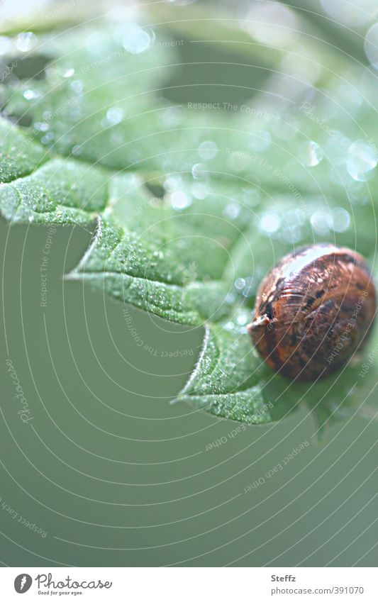 young snail on a serrated leaf at home stay at home be at home Snail shell Domicile young animal safe at home stay safe Spherical jagged serrated blade Crumpet