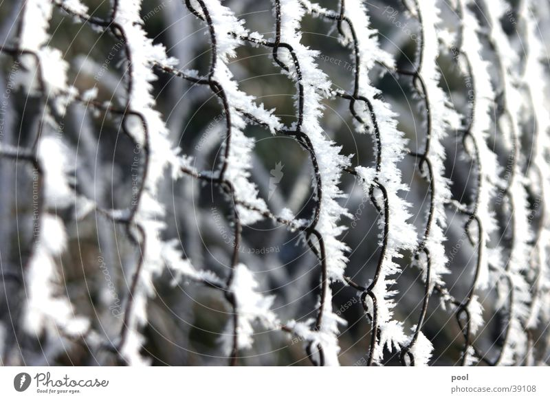 Winter Cold Snow Ice Fence Crystal structure Hoar frost Loop Wire netting fence Pasture fence