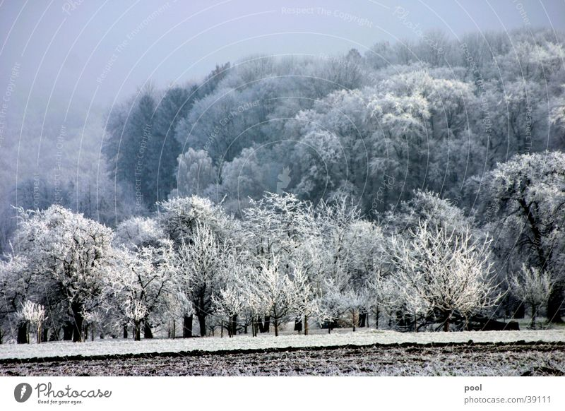 winter landscape Winter Hoar frost White Tree Meadow Forest Cold Fruit trees Fog Mountain Snow Ice Colour Gloomy Sun