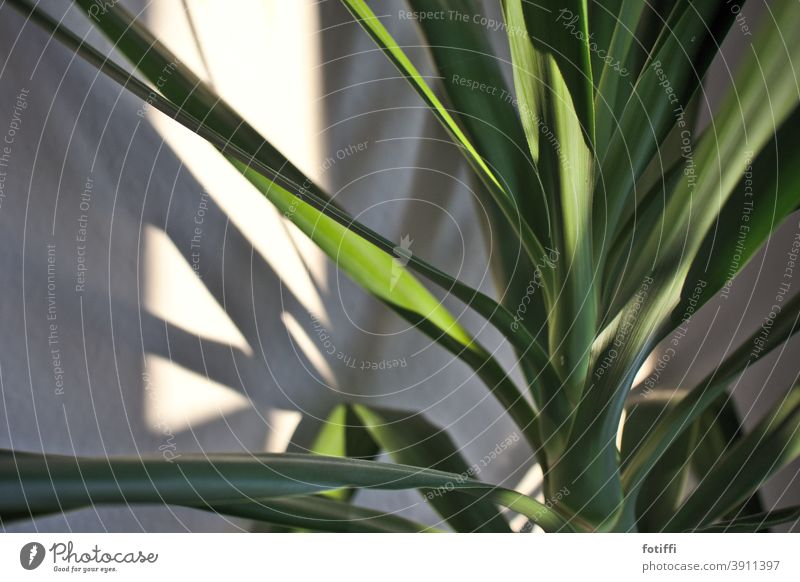 Under palm trees Plant Houseplant Palm tree Foliage plant Green Leaf Close-up Deserted Nature Exotic Growth Palm frond Tree Vacation & Travel Environment