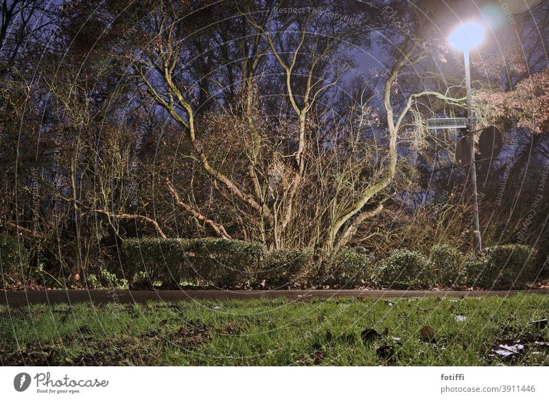 Branched tree in romantic lantern light vegetation Tree flora and fauna Lanes & trails Night nocturn Night shot Grass Calm Deserted Plant Nature Exterior shot