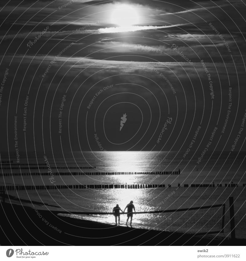 Come on! Beach Baltic Sea Water Sunlight Reflection Light (Natural Phenomenon) Silhouette people Couple two man and woman To go for a walk Hold hands Horizon