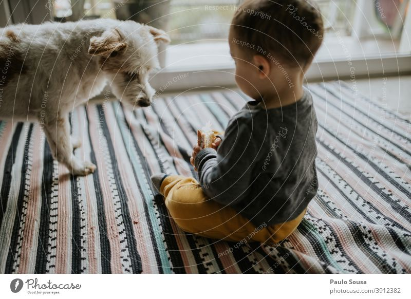 Child playing with dog at home childhood Together Pet Dog Authentic Love pet Playing Lifestyle Cute Animal Friendship Colour photo Infancy Love of animals