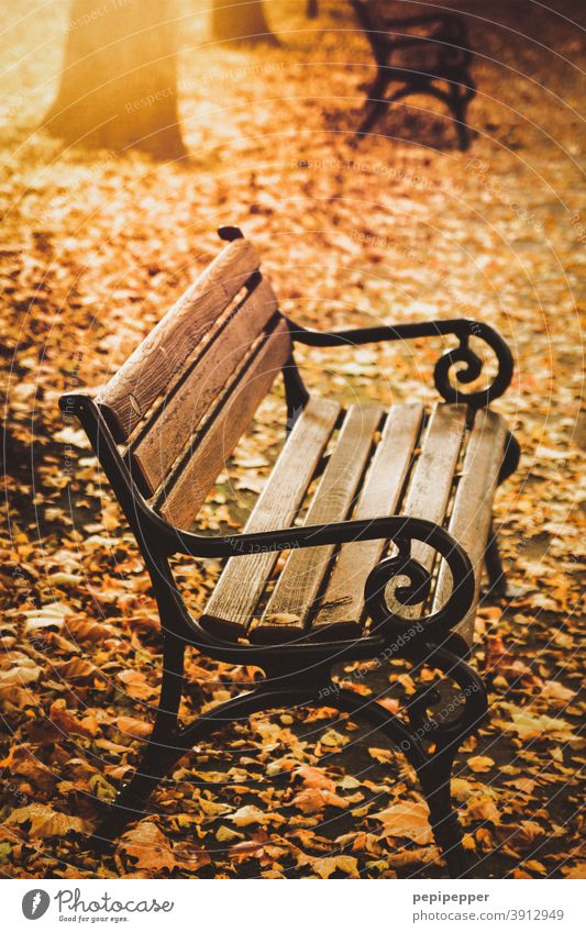 Bench in a park in autumn bench Autumn Park Deserted Exterior shot Colour photo Tree Leaf Calm Autumn leaves Sun Autumnal Autumnal colours Early fall