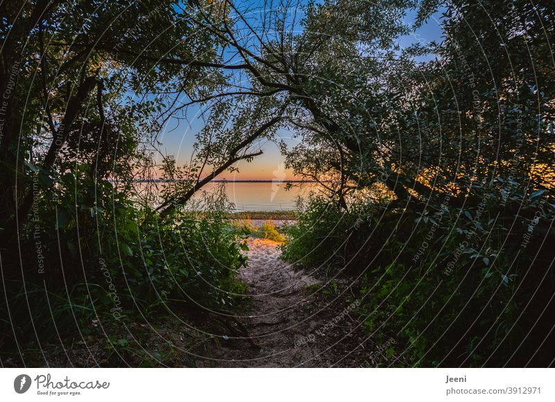 Wooded beach access with sandy path | Warm summer evening by the sea with blue sky and beautiful sunset Summer Summer solstice Beach Evening Dusk Sunset Ocean