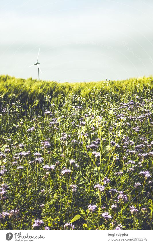 Renewable energy on the horizon flowers Flower meadow wild flowers wildflower meadow Wild plant Nature Meadow Blossom Blossoming Summer Plant meadow flowers