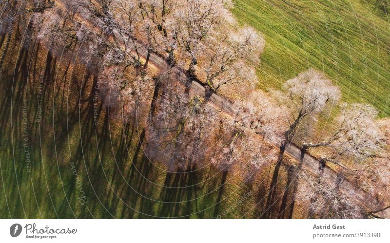 Aerial view of an avenue in Germany in December with a drone Aerial photograph Landscape Avenue off kurfüstenallee Marktoberdorf Bavaria Allgäu trees plants