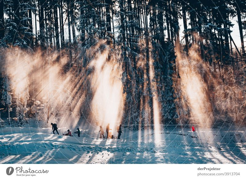 People with sledges against the light in the Harz mountains II Joerg farys National Park nature conservation Lower Saxony Winter Experiencing nature