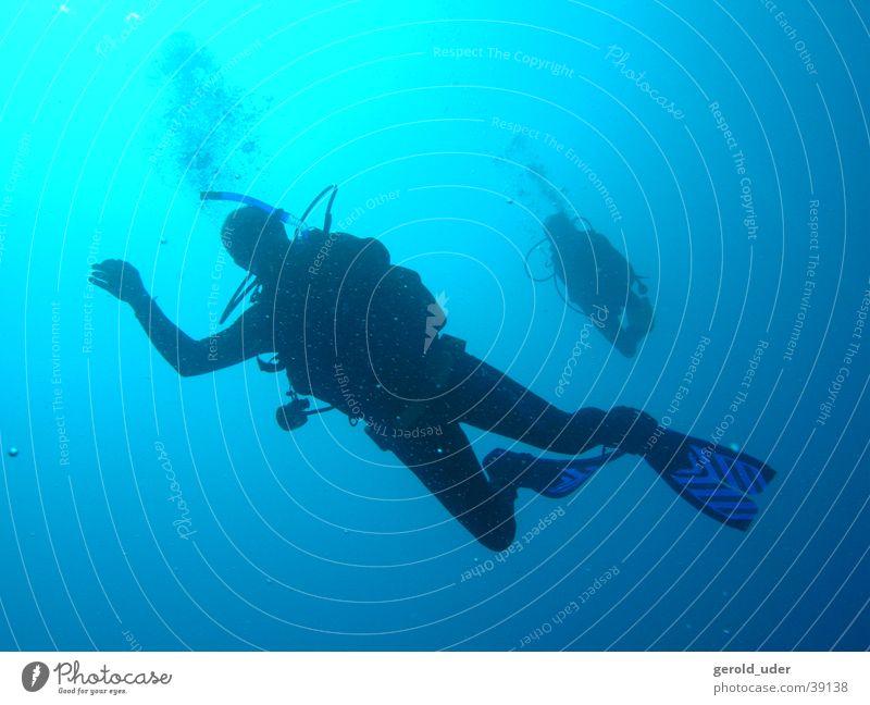 free fall Dive Sports Water Underwater photo Cuba Hilma Hooker