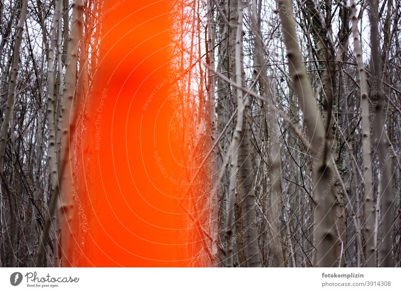 in the foreground blurred orange marked trunk in the grey bare forest of Forstwald Nature Tree bright orange neon colours Beech wood Book forestry Gray trees