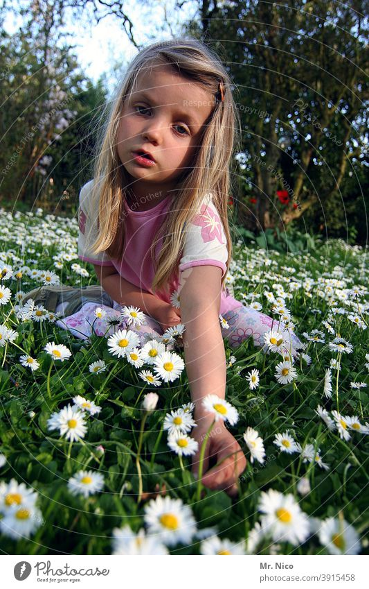 I'm gonna pick me a daisy... Meadow Garden Green Grass Nature Summer Flower Daisy Spring Plant White Yellow Blossoming Flower meadow Spring fever Long-haired
