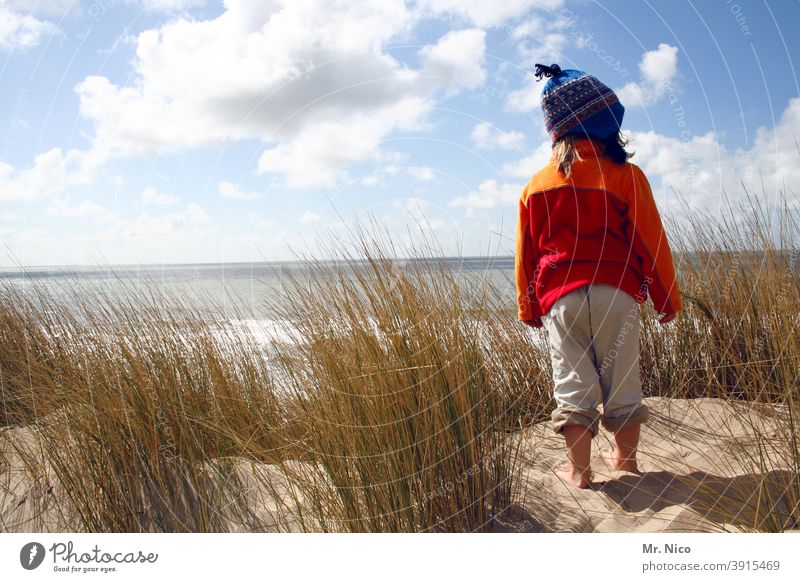 lookout Beach Landscape Beach dune Relaxation Nature Summer vacation Freedom Trip Adventure Far-off places Plant Calm Weather Environment naturally Discover