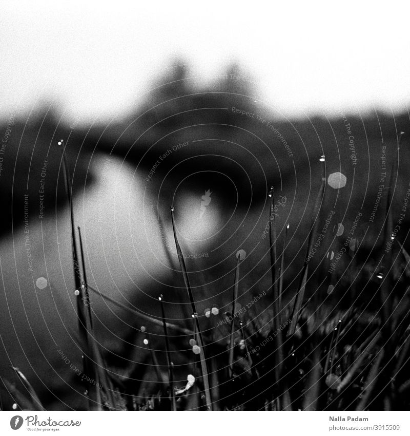 Water drops on grasses Analog Analogue photo Black & white photo Grass Drops of water Channel blurriness morning dew Damp Exterior shot Nature Wet Dew Morning