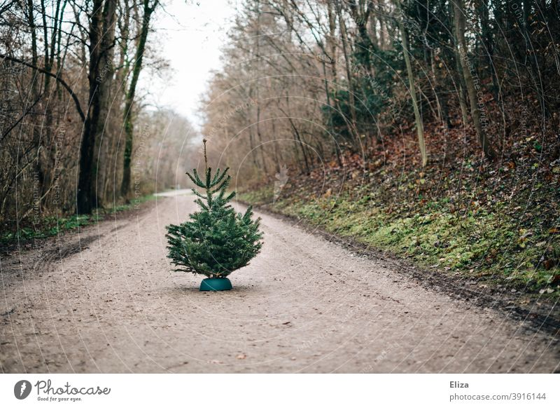 Fir tree on forest road firs fir trees Nordmann fir Shopping Christmas tree sale Tradition Green Coniferous trees Nature out Forest forest path Lonely