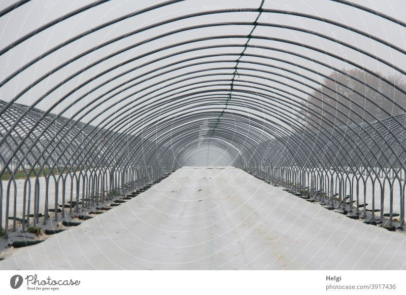Metal frame as preparation for a foil tunnel in strawberry cultivation, the bottom is covered with white foil metal linkage metal rods flexed Tunnel