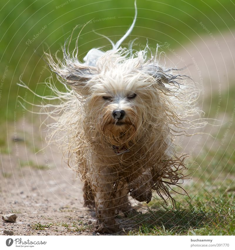 Dog Green White Animal Meadow Lanes & trails Hair and hairstyles Small Action Dirty Speed Wet Pelt Running Passion Pet