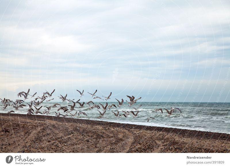 Vacation & Travel Blue Water Summer Ocean Clouds Animal Beach Life Coast Freedom Sand Brown Bird Flying Waves