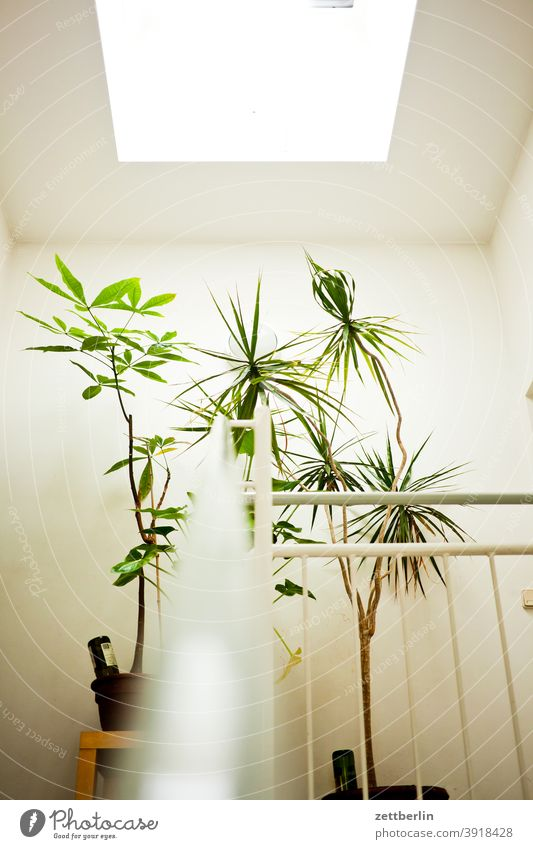 Landing with green plants sales Descent Downward Old building ascent Upward Window rail House (Residential Structure) Apartment house Deserted
