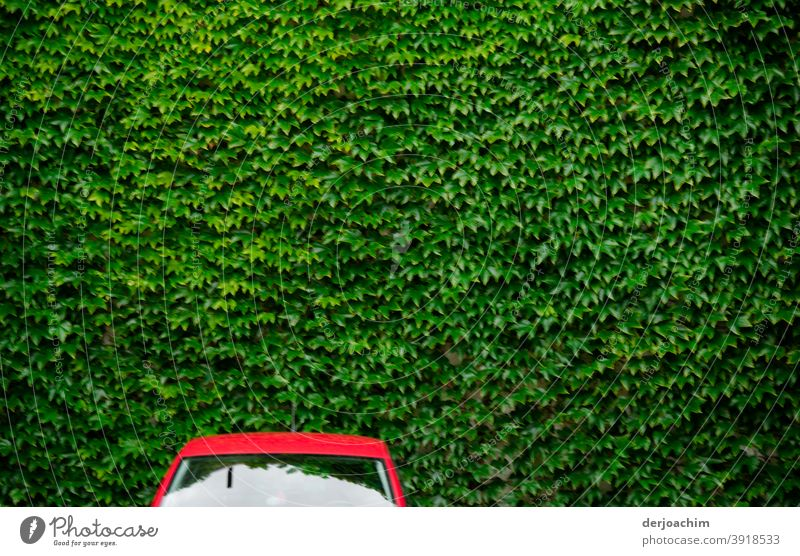 "A"" Red "" car, without side mirrors stands in front of a green wall of leaves.... Transport Car Street Bumper car Colour photo Vehicle Fairs & Carnivals Deserted"