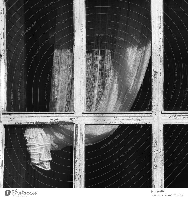 Elegantly draped curtain behind window Curtain Window Drape Light Cloth Living or residing White elegance Shadow Window frame Window transom and mullion