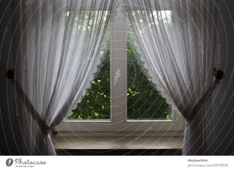 White pretty curtains with loop tape . Decoration and window decoration. In front of the window is a green hedge . Curtain Cloth Light Colour photo Shadow