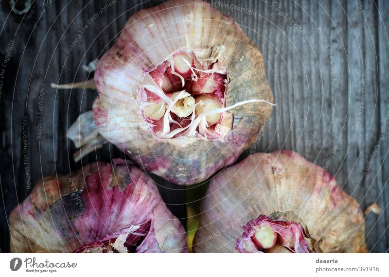 Garlic Food Vegetable Herbs and spices Vegetarian diet Slow food Elegant Healthy Life Entertainment Nature Plant Glittering Fight Love Friendliness Happiness