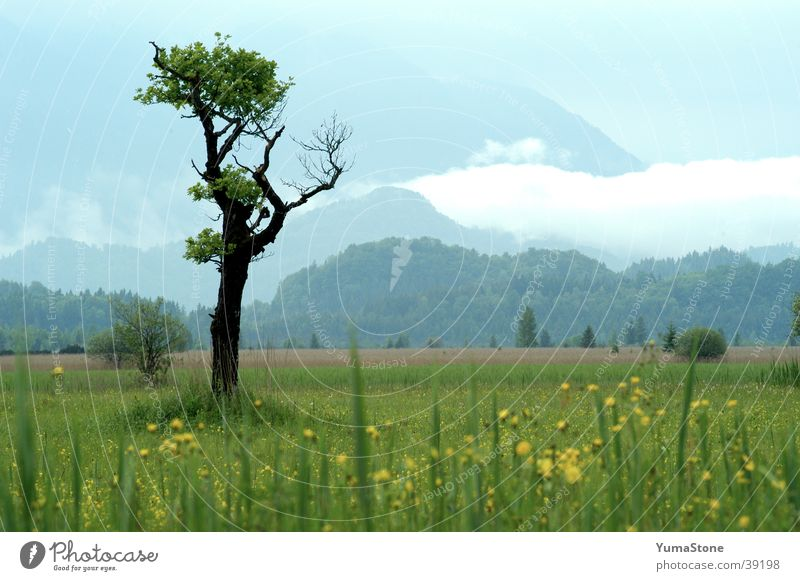 Tree Calm Meadow Mountain Landscape Germany Idyll Bavaria Harmonious National Park Upper Bavaria