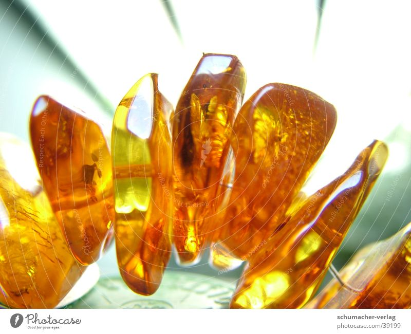 amber Amber Macro (Extreme close-up) Resin Back-light Things semi-precious stone Chain