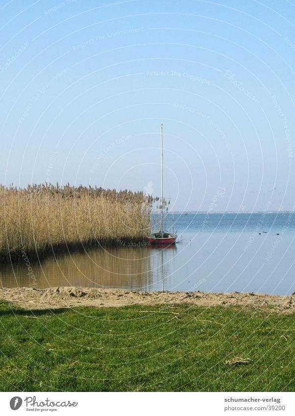 lake Lake Ocean Horizon Grass Beach reed grass Coast