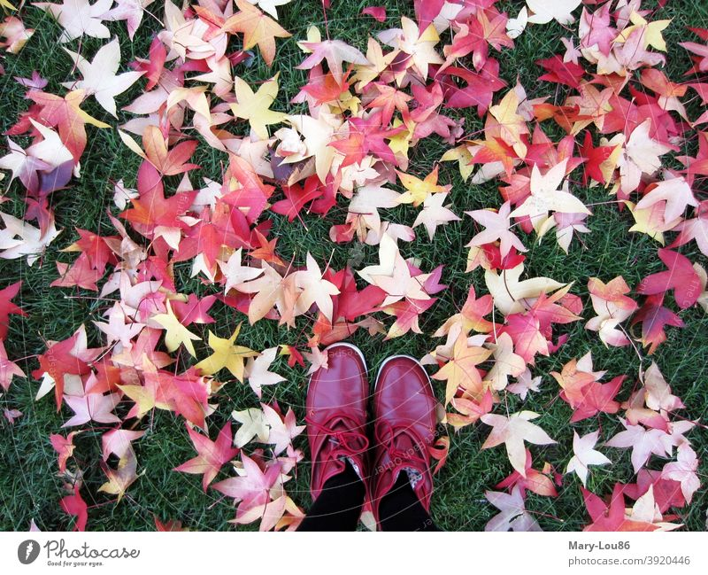 Red shoes on lawn with colored autumn leaves Autumn leaves red shoes Footwear Nature To go for a walk out Exterior shot Lawn Park Grass Meadow colors Yellow