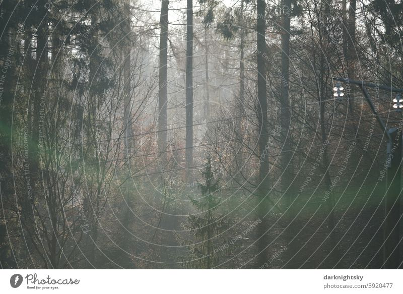 Nature photograph of a forest with a simple line for transporting electricity Sustainability plants reforest Earth Boy (child) old Mixture Central perspective