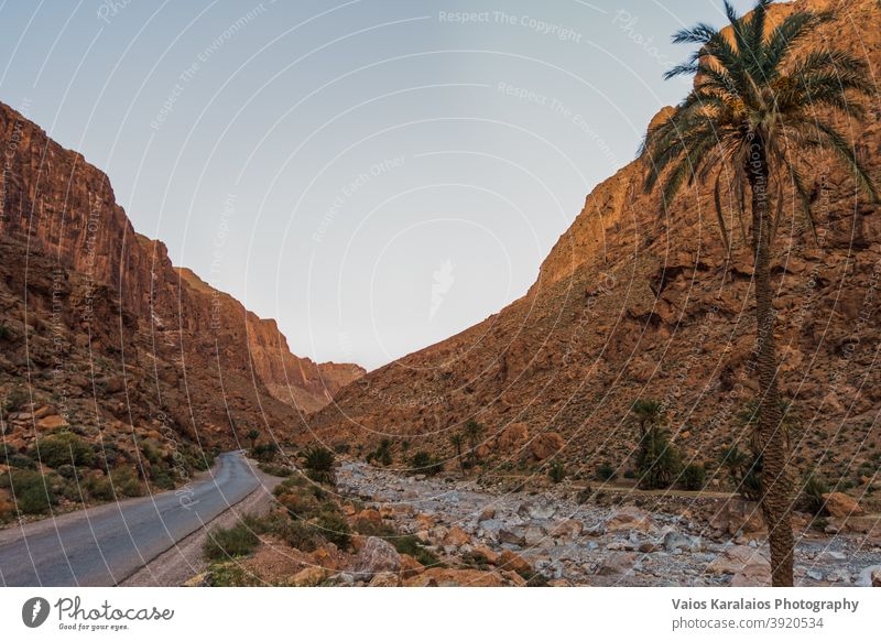 Todra gorge in Morocco during sunset, palm tree in the foreground desert scenery adventure canyon moroccan nature scenic sunny rock destination cliff atlas