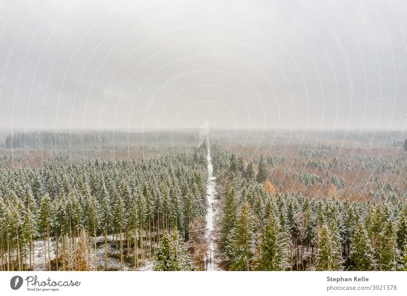 Snowy and frozen winter from above leading through a white forest. road woods snowy aerial tree nature weather season scenic scenery ice frost day rural