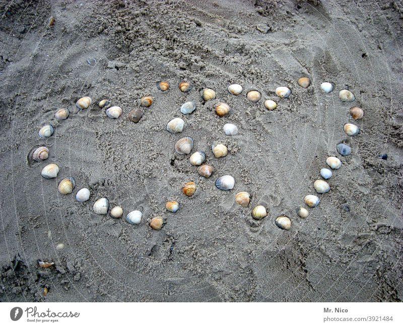 conform I heart in heart Heart symbol Beach seashells Romance Infatuation Love Sincere Sign Display of affection Heart-shaped Declaration of love Sandy beach