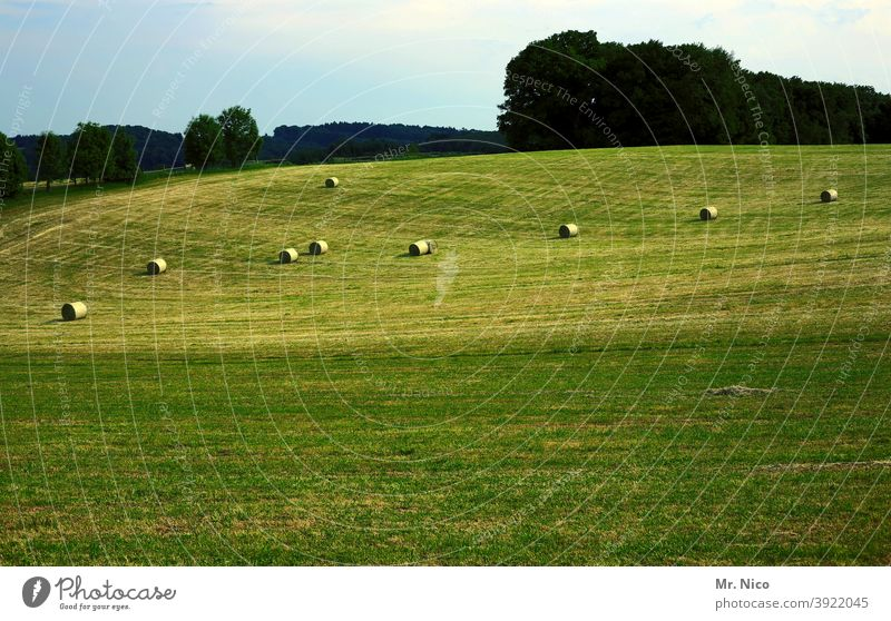 Haymaking Landscape Nature Meadow Field Green Grass Hay bale Harvest Agriculture Hill hilly Rural Environment country Sky Forest agriculturally make hay Eifel