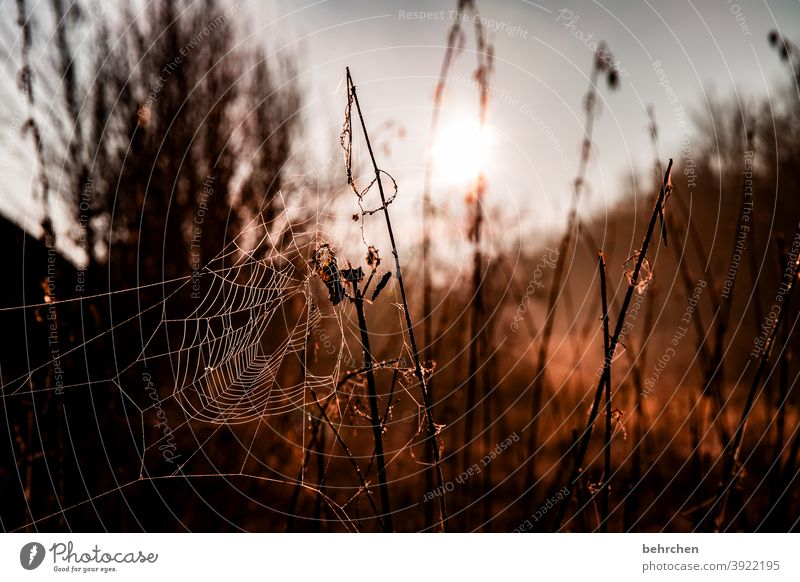 cross-linked Seasons Winter Autumn Forest Work of art spiderweb Dreamily Back-light Light Field Flower Twigs and branches Garden Meadow Sunrise Sunlight Nature