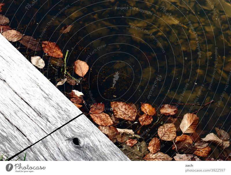 Leftovers from autumn Autumn Autumnal Autumn leaves Leaf Nature Autumnal colours foliage Water Lake Pond ponds Footbridge Wood chill Cold Damp Wet Transience