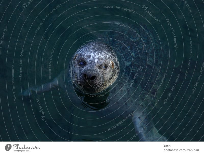 head cinema Animal Seals sea seal Wild animal coast Nature Ocean Water North Sea Harbour seal Gray seal Head