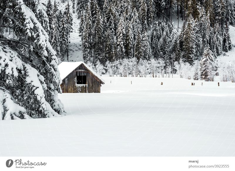 Deep snowy landscape with hay barn and trees Winter vacation Beautiful weather Wooden hut Tree Simple Loneliness Uniqueness Cliche Idyll Nature Autumn Frost Hut