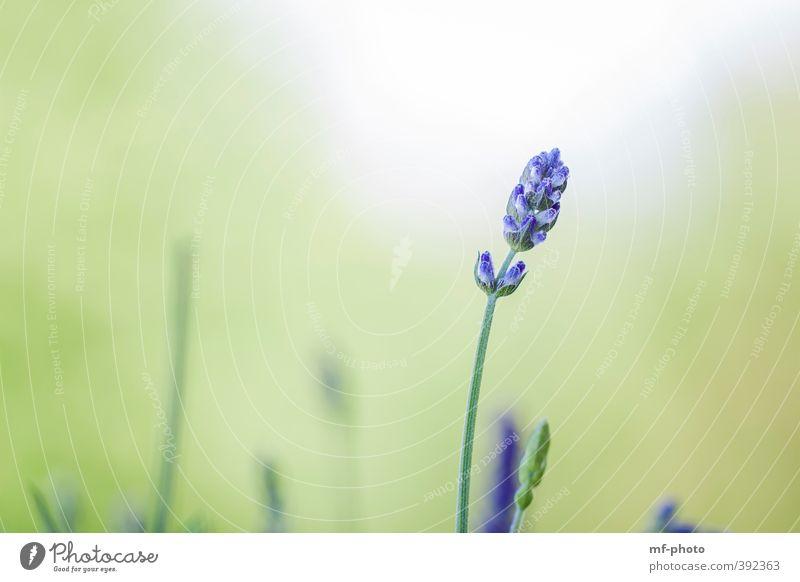 Nature Blue Green White Summer Plant Landscape Environment Spring Violet
