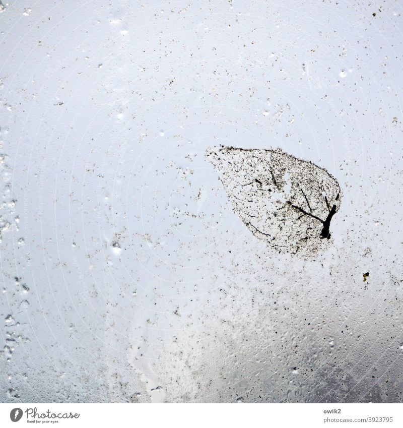 Peel off Leaf Pane Wet Near Translucent Hazy adhere Small Transparent Autumn leaves Stick Transience Copy Space right blurriness Glass Copy Space bottom