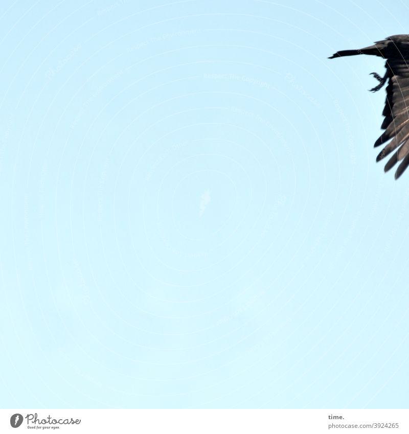 4eyes | leaving 2020 Sky Bird Flying Grand piano sunny plumage feet Animal animal portrait Copy Space