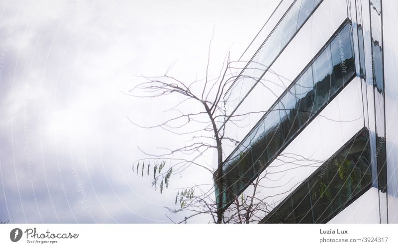 Facade of an office building, bare branches and grey sky Autumn Bleak Twigs and branches Tree Exterior shot Deserted Colour photo Branch Branchage Autumnal Sky